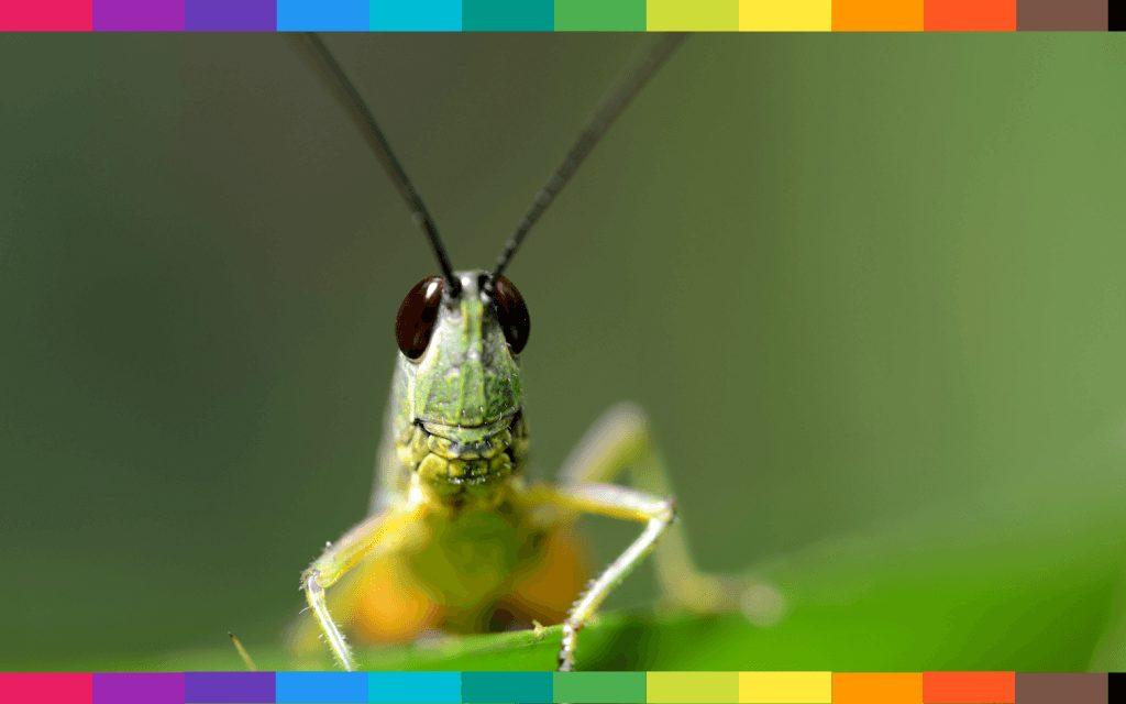 Sognare insetti oppure un insetto