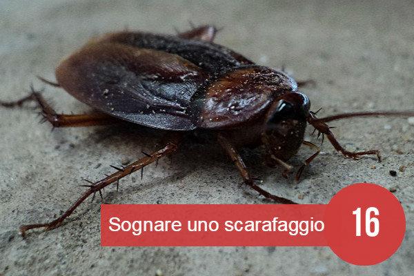 sognare scarafaggio