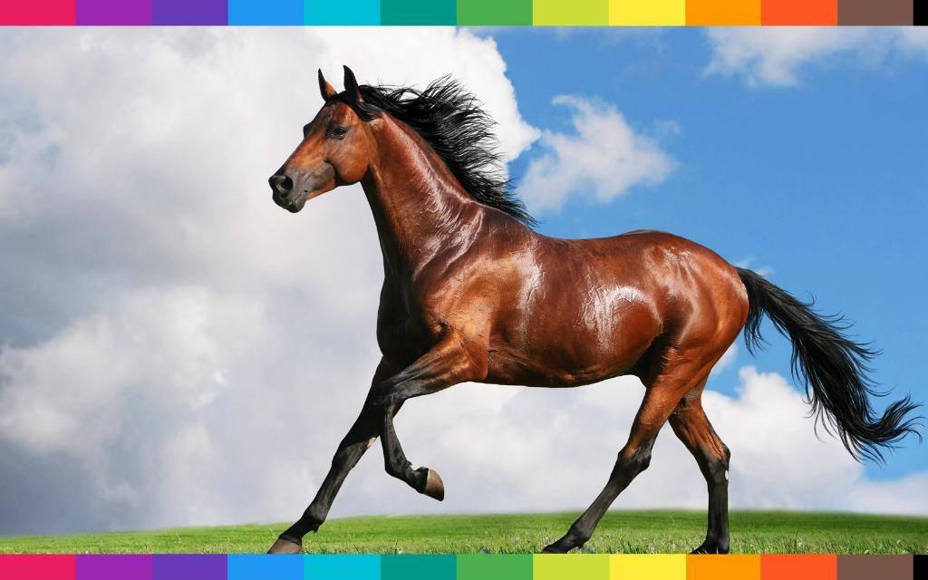 Sognare un cavallo, al galoppo oppure imbizzarrito, cosa