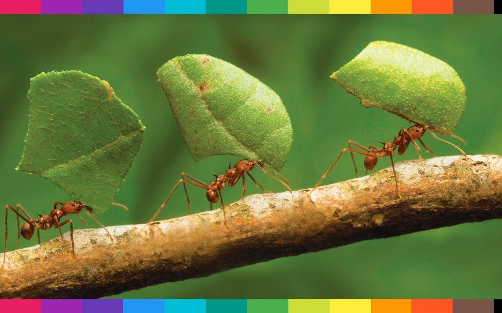 Sognare formiche, cosa significa?