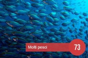molti pesci