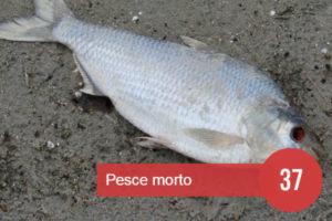 sognare pesce crudo oppure morto