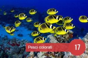 sognare pesci colorati